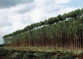 Plantations are damaging to the environment